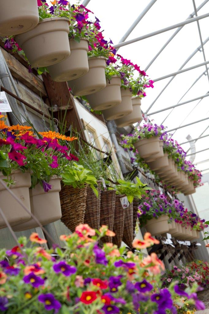 potted hanging flowers red, orange, purple, and pink