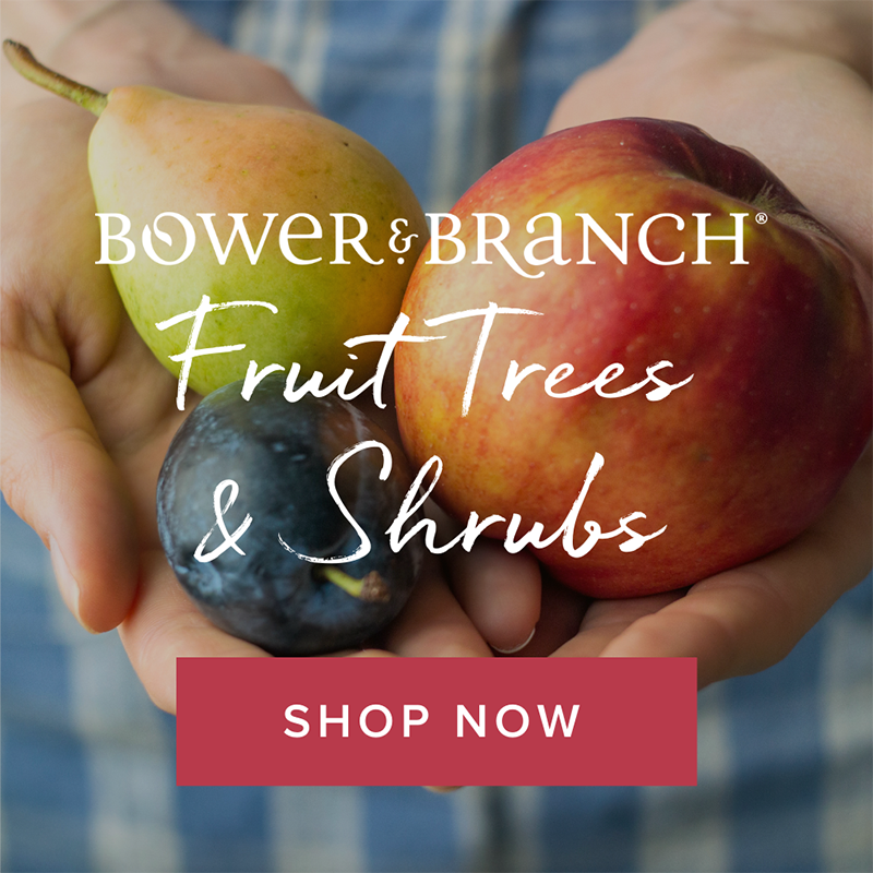 fruit tree ad