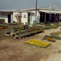 farm market with garden pallets of flowers outside
