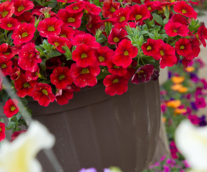 potted hanging basket red flowers