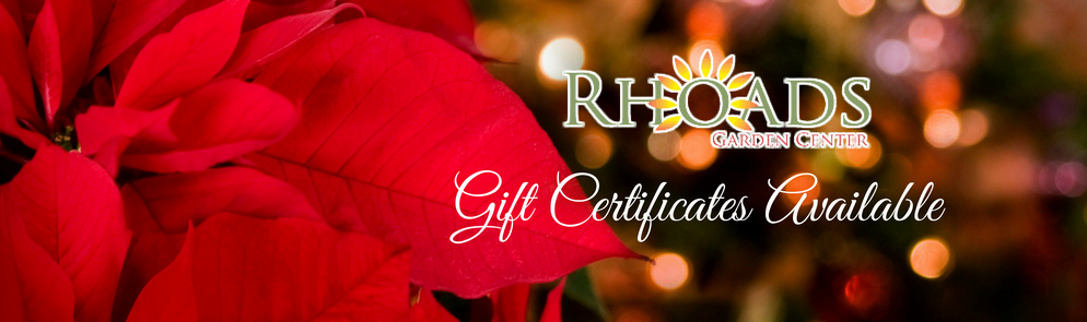 poinsettia with Christmas lights and rhoads logo with gift cerficiates available text